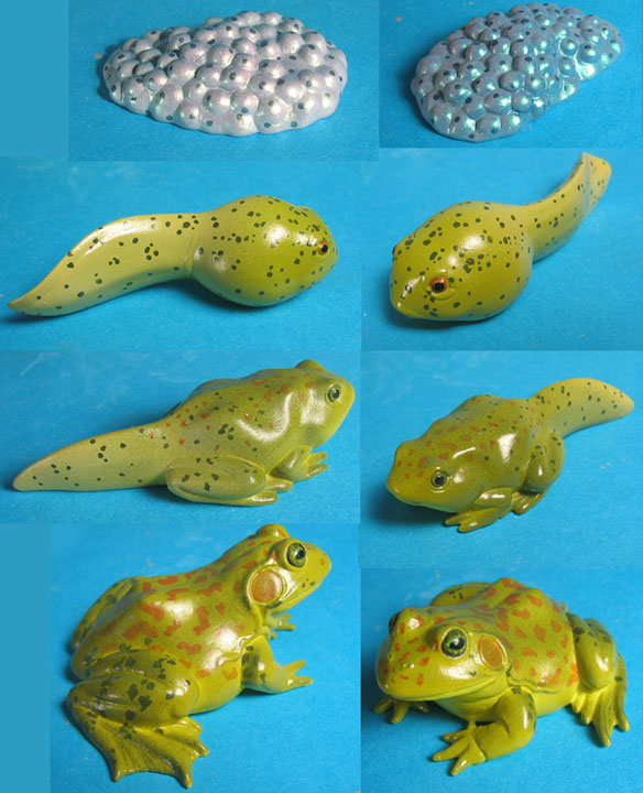 Frog life cycles for Insect Lore - painted samples vinyl figures