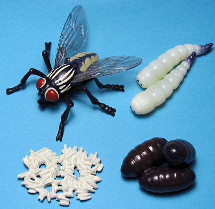 fly life cycle for Insect lore, vinyl figures , never produced