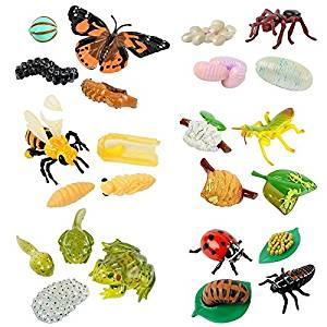 Insect life cycles for Insect Lore - butterfly, ant, honey bee, praying mantis, ladybug